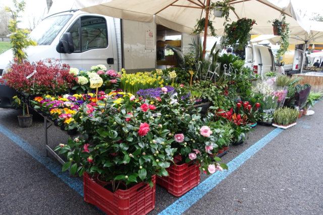 フィレンツェ「カッシーネの朝市」の花屋