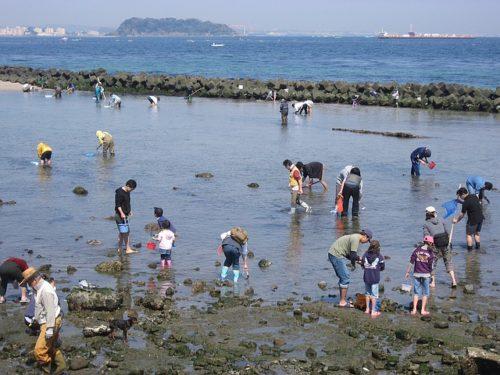 潮干狩り中の人々