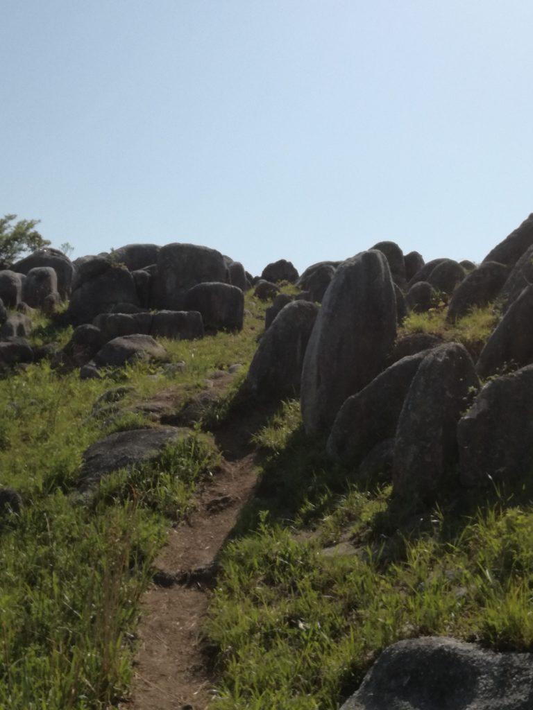 平尾台「貫山」の羊群原